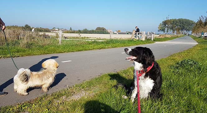 Controle over je hond