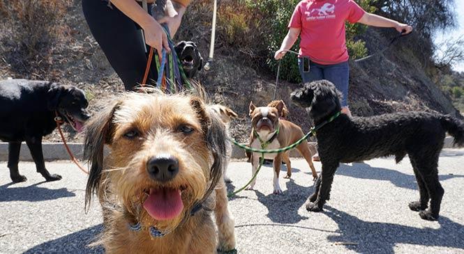 Eigen angst voor honden overwinnen: 8 tips