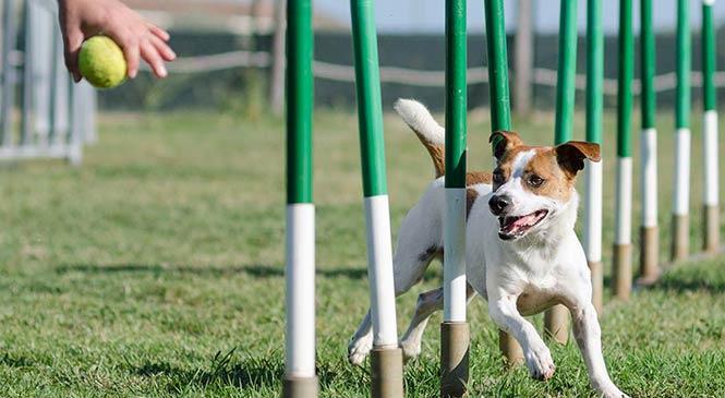 6 Manieren om je hond mentaal uit te dagen