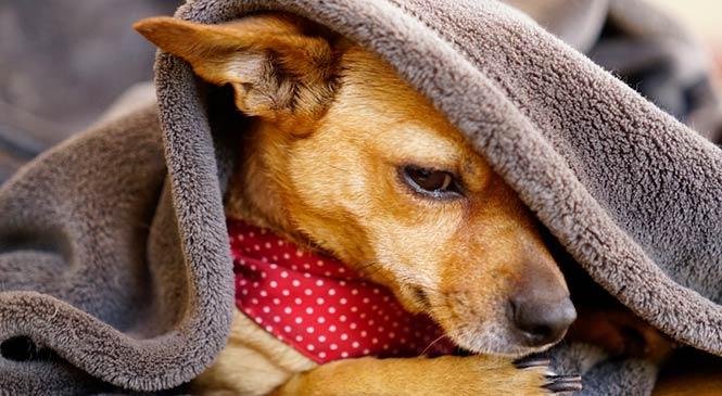 Hond bang voor vuurwerk: 10 oplossingen