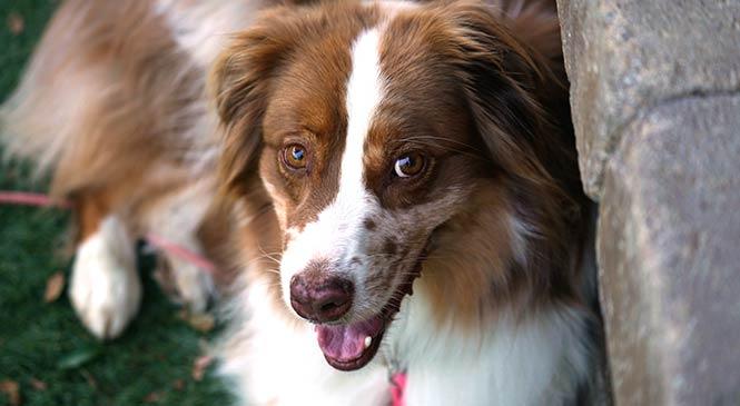 Hond bang voor onweer: 10 oplossingen