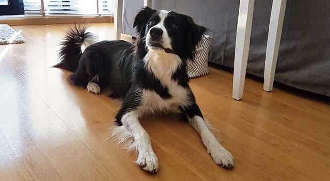 Hond plast in huis